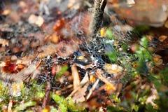 Spider& x27; s Web dat chaotically met dalingen van water wordt geweven Royalty-vrije Stock Afbeelding