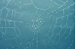 Spider's web with dew Stock Images