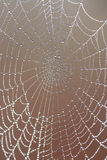 Spider's web with dew drops Royalty Free Stock Photos