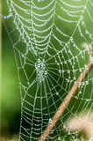 Spider's web with dew Stock Image