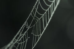 Spider's web, drops of water, morning dew Royalty Free Stock Photos