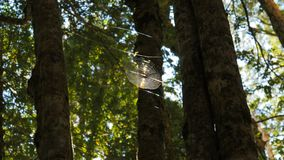 Spider`s web high in a beech forest is lit by sunlight stock video footage