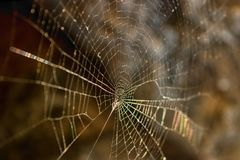 Spider`s web illuminated by the evening sun. Selective focus. royalty free stock photo