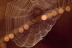 Spider`s web with light spots in background. Close up of spider`s web in forest on dark orange background with light spots Royalty Free Stock Images