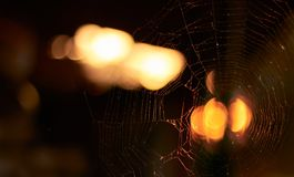 Spider`s web lightened at sunset outdoor in the evening, blurred background. Copy space, macro, close-up. Halloween concept royalty free stock image