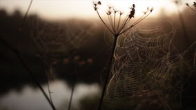 Spider's web morning dawn river stock video footage