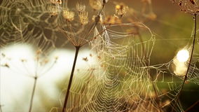 Spider's web morning dawn river stock video