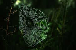 Spider's web. Royalty Free Stock Photography