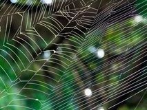 A spider`s web in the morning light royalty free stock photos