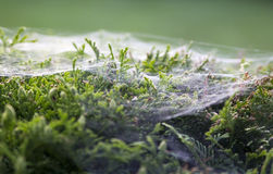 Spider's web Stock Photo