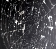 Spider's web Royalty Free Stock Images