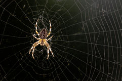 A spider on it's web in the sun Royalty Free Stock Image