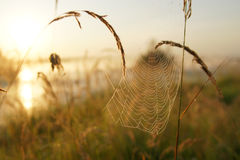 The spider`s web. Royalty Free Stock Photography