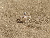 Spider on a sand. Stock Image