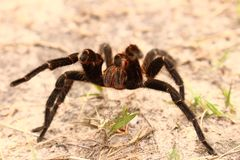 Spider in sand stock photo
