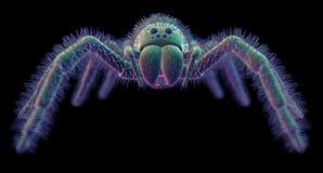 A spider Stock Photos