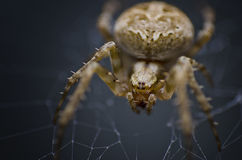 Spider sense Royalty Free Stock Images