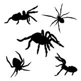 Spider set. Of black silhouettes. Icons and illustrations of animals. Wild animals pattern royalty free illustration