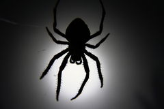 Spider Silhouette. A silhouette of a large, hairy, creepy spider Stock Images