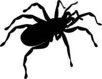 Spider silhouette Royalty Free Stock Images
