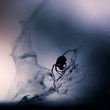Spider silhouette against the web Royalty Free Stock Images