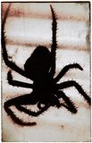 Spider silhouette. Creepy silhouette of a spider Royalty Free Stock Photography