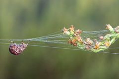 Spider Silk Thread Stock Photo