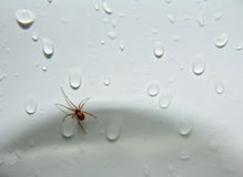 Spider in the Sink!. A spider in a wet sink royalty free stock image