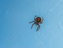 Spider sits on his cobweb. Royalty Free Stock Photo