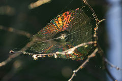 Spider sits among his color web Stock Photo