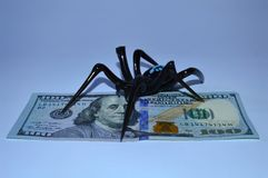 Black spider sits on one hundred dollar bills. A spider sits on a hundred dollar bills on a white background Royalty Free Stock Images