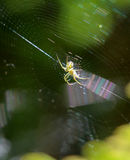 Spider sits in its lair. Ictureof a spider sits in its lair Stock Image