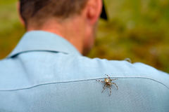 Spider sits on man spine. Fear of insects. Arachnophobia Royalty Free Stock Photography
