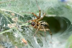 Spider in nest waiting for for prey royalty free stock photos