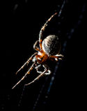 The spider sits on a web on the hunt Stock Images
