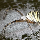 The spider sits on a wet web Royalty Free Stock Images