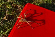 Spider sitting on my book. bookworm. Beautiful Spider sitting on my red book. Bookworm, Halloween concept stock images