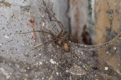 Spider sitting on a spider`s web. Big spider sitting on a spider`s web Royalty Free Stock Photo