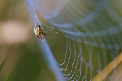 Spider sitting on web Stock Photo