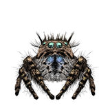 Spider sketch drawing  Royalty Free Stock Photos