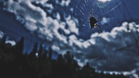 Spider in the sky Stock Photo