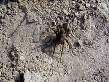 Spider on a sliver Royalty Free Stock Photography