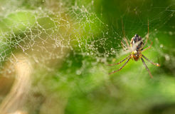 Spider and small fly Royalty Free Stock Photography