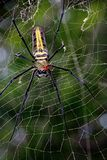 Spider on spider stock photography