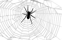 Spider and spider web Stock Image