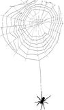 Spider and spider web Royalty Free Stock Photography