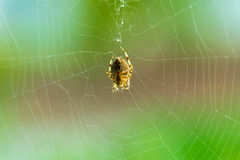 Spider on the spider web backlit by sun Royalty Free Stock Photography