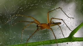 Spider in spider web. stock video