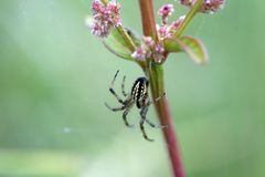Spider in a web royalty free stock photo
