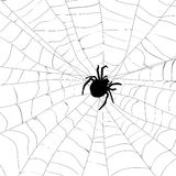 Spider and spider web Stock Photos